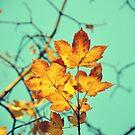 Golden Leaves by KisaSunrise