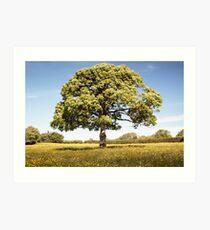 Sunny Day onthe Common Plot Art Print