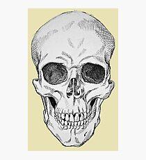 Frontal Skull Anatomical Drawing Photographic Print