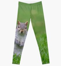 Cheeky grey squirrel Leggings