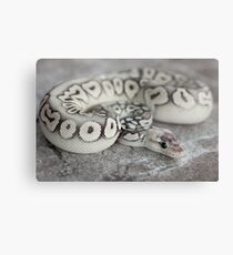 BALL PYTHON - SILVER STREAK Canvas Print