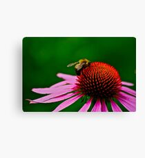 Busy Bumble Bee 2 Canvas Print