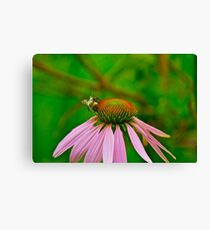 Busy Bumble Bee 3 Canvas Print