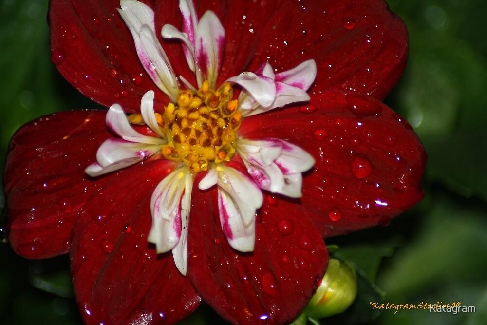 Rained Bow by Katagram