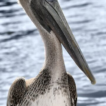 PELLY THE PELICAN  by Rapture777