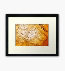 Yellow agate mineral super macro Framed Print