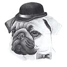 Pug with bowler by doggyshop