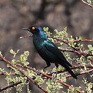 Birdie blue by Gilberte