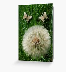 DANDILION PICTURE WITH DANDILION BUTTERFLIES MADE FROM THE DANDILION...PICTURES AND OR CARDS.. Greeting Card