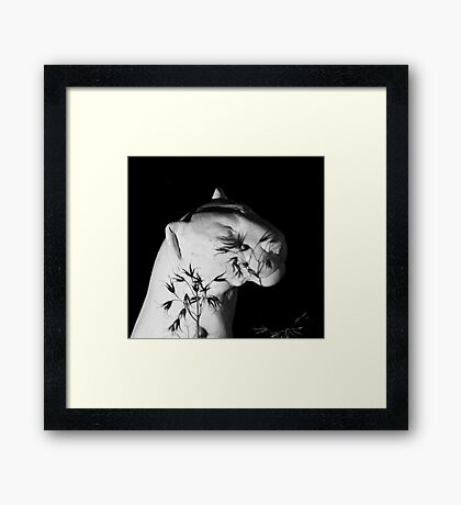 Still Life Framed Print
