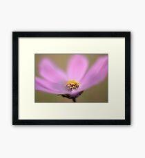 Pink Cosmos flower Framed Print