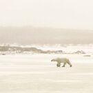 Fog Bear by Linda Sparks