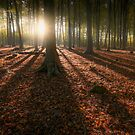 Kingswood Autumn by Ian Hufton