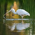 YELLOW SPOONBILL by Raoul Madden