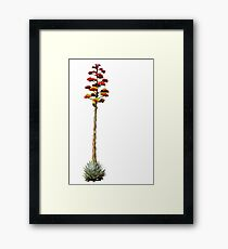 Agave in Bloom Framed Print
