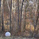 Left In The Woods by Elizabeth  Lilja