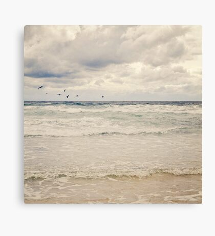 Seagulls take flight over the sea Canvas Print