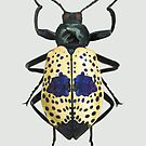 Spotted Beetle by dcrownfield