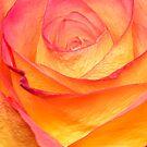 Colourful Rosie by peaky40