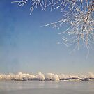 Winter wonderland with snowflakes by Lyn  Randle