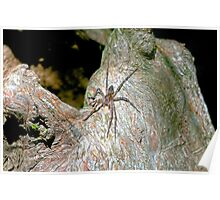 Big Spider on a Cyprus Knee Poster