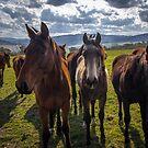 Horse landscape by Delightfuldave