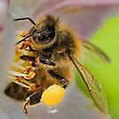 The Pollinator by John  Kowalski