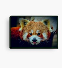 Red Panda with border Canvas Print