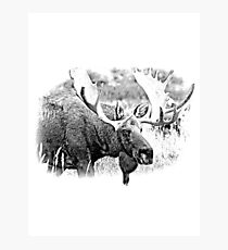 Bull Moose. Wildlife Moose. Moose Antlers. Canadian Moose. Alaskan Moose. Photographic Print