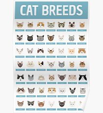 Cat Breeds Poster