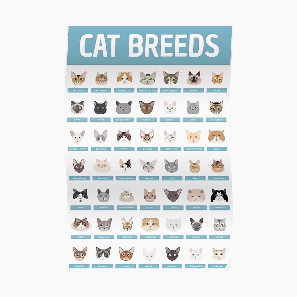 Razas de gatos Póster