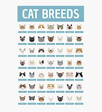 Cat Breeds Photographic Print