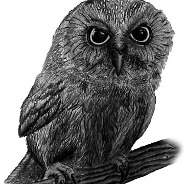 This Owl Is Just What It Seems by LaGueule