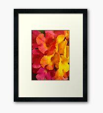 Macro mini flowers Framed Print