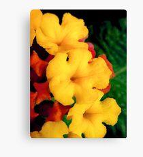 Mini macro flowers Canvas Print