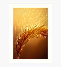 Wheat macro Art Print
