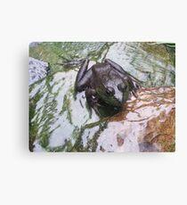 frogger Canvas Print