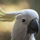 Cockatoo smile by STEPHEN GEORGIOU PHOTOGRAPHY