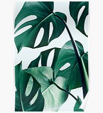 Monstera #redbubble #artprints Poster