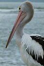 Pelican Portrait by Trish Meyer
