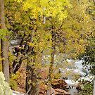 Peek-a-boo View of Oak Creek by Jim Stiles
