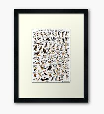Raptors of the Indian Subcontinent Framed Print