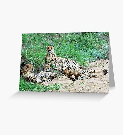 SIESTA IN KRUGER - THE CHEETAH -  Acinonyx jabatus – Die Jagluiperd Greeting Card
