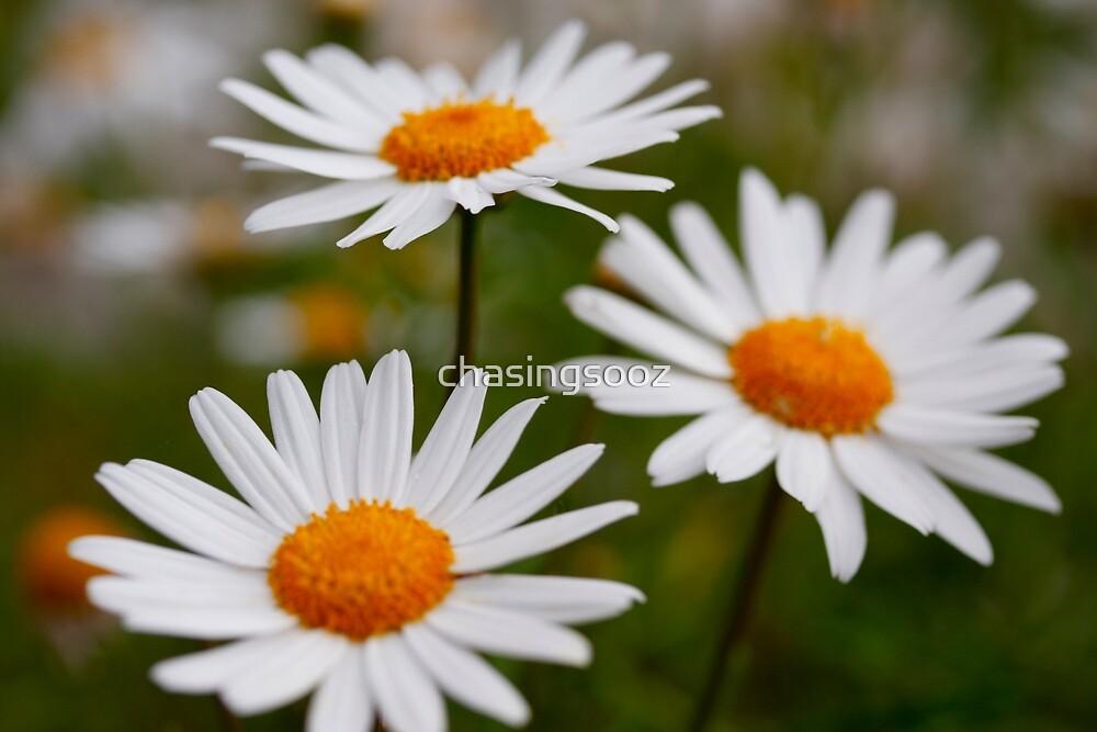 Daisies in my garden always make me smile. by chasingsooz