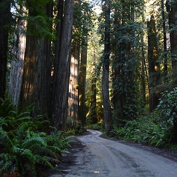 Redwood National & State Parks by chaneyforkriver