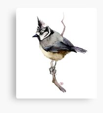 bird on branch Canvas Print