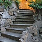 Stone Steps At Dusk by phil decocco
