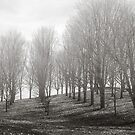 Trees Without Leaves by Kelly McKee