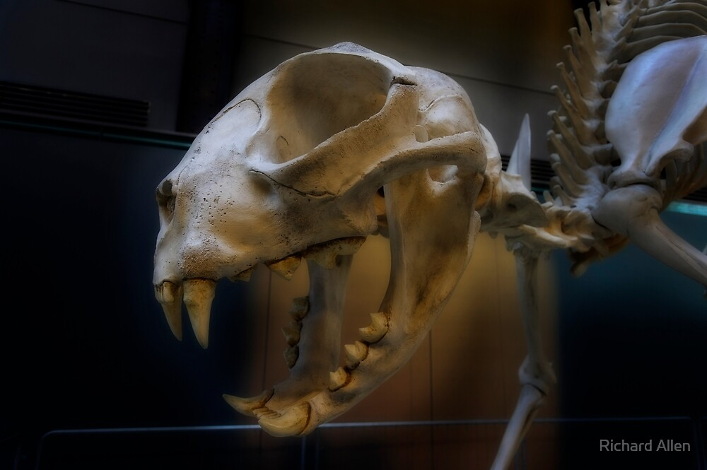 Dinosaur by Lea Valley Photographic