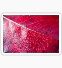 Abstract Leaf Color Study 2 Sticker